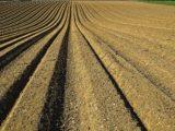 terre-agricole-periurbaine