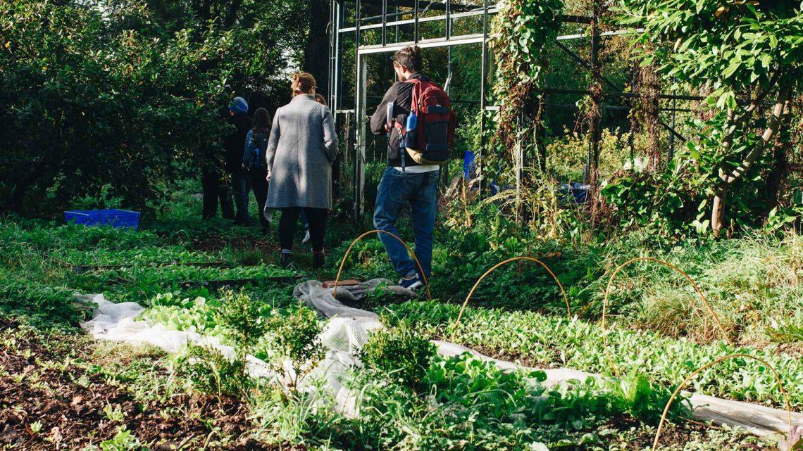 Transfert de métaux dans les végétaux : quels risques pour l'homme ?