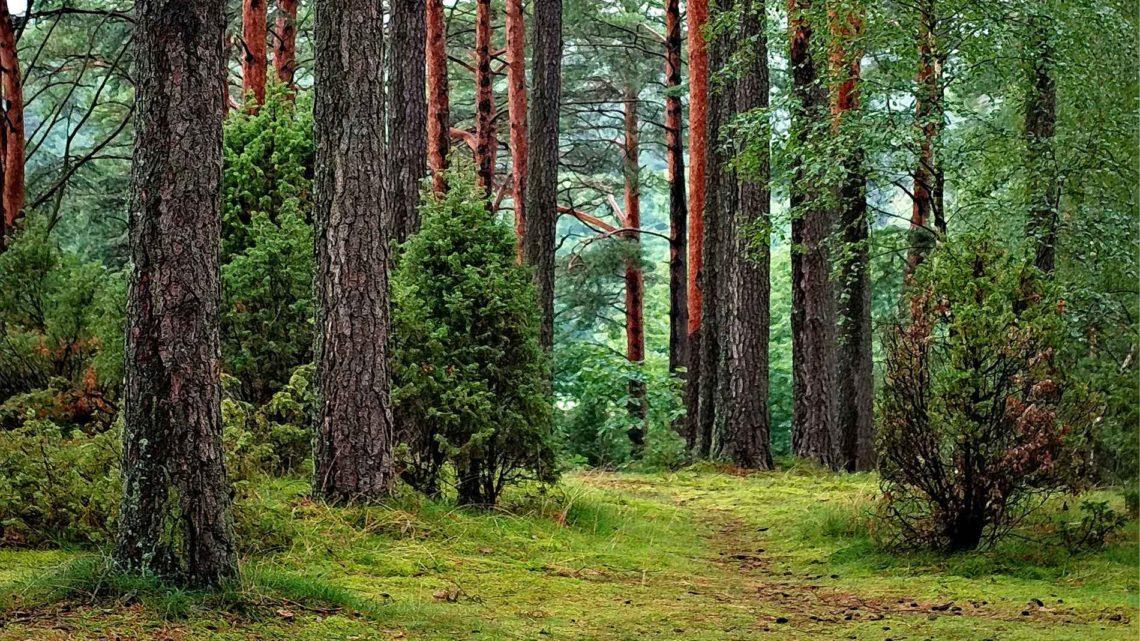 Culture, jardins et forêts