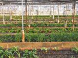 initiatives-agricoles-ecologiques