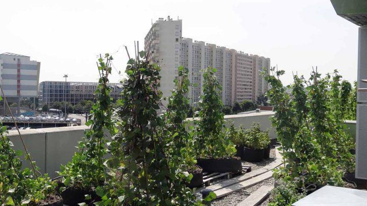 «Ascenseur pour le potager», un film-recherche sur l'agriculture urbaine