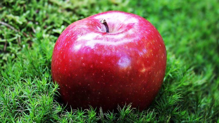 La transition écologique pour promouvoir l'alimentation durable