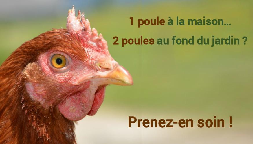 1 poule à la maison… 2 poules au fond du jardin ?