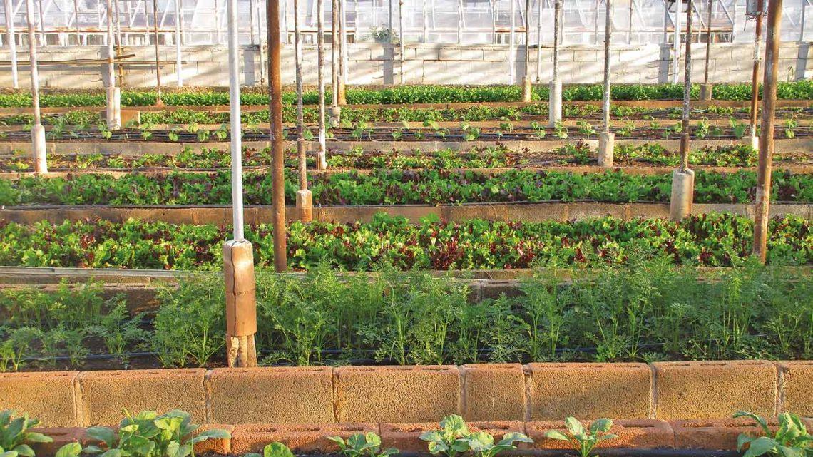 Comment concilier la qualité des cultures et les pollutions anthropogéniques des sols  ?