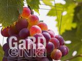 projet-gardenia