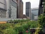brooklyn-grange-rooftop-bories