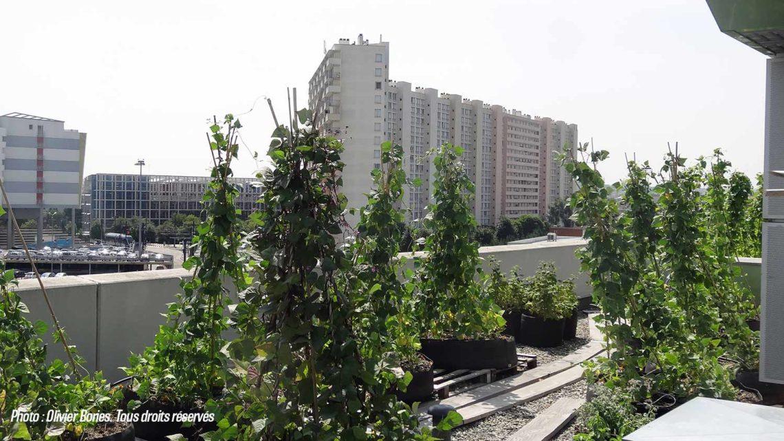 Agriculture urbaine : vraie bonne idée ?