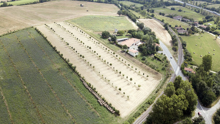 Film-recherche : agroforesterie, agroforestiers et paysages