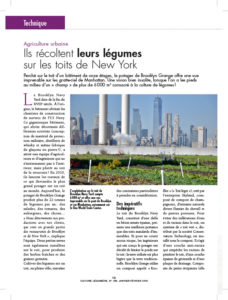 article-cultures-legumieres