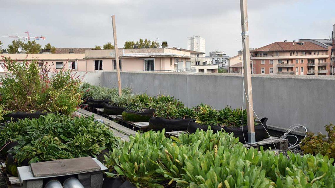Colloque Agriculture Urbaine : quelle place dans les systèmes alimentaires des villes ?