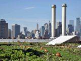 phototheque-brooklyn-rooftop-1024x585
