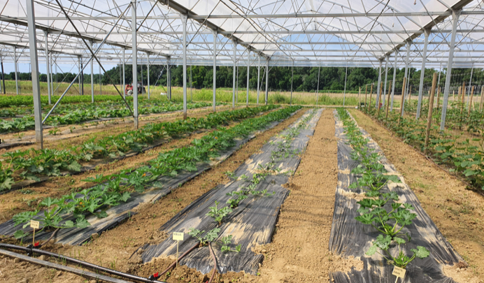 Alimentation Durable et Care Environnemental en Occitanie
