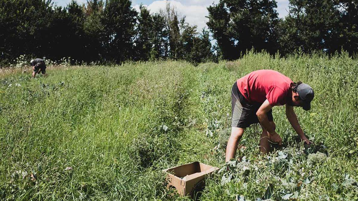 Prodistribio : pour faire émerger une filière locale agroécologique de légumes de plein champ